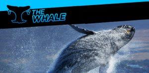 the-whale-promo_v002